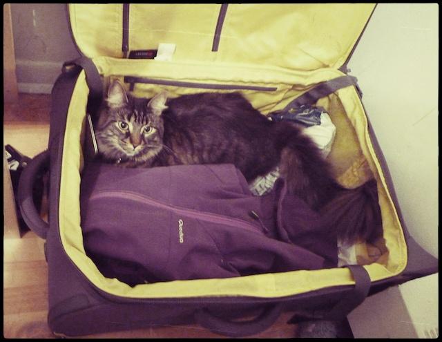 Retour en france ramener son chat du canada lili au pays des merveilleslili au pays des - Que ramener de budapest ...